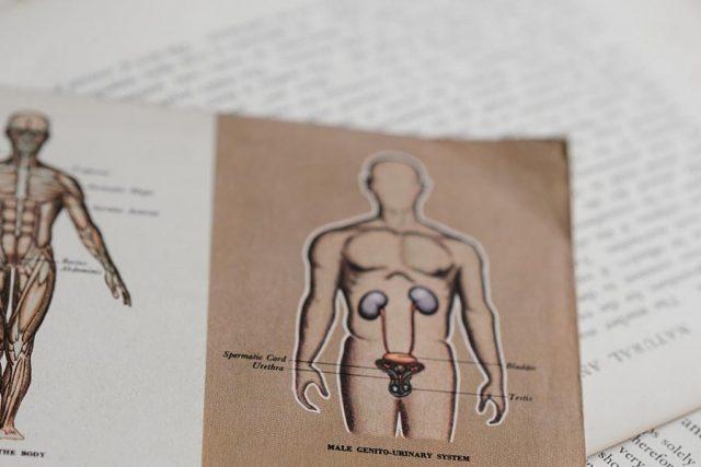 medische-basiskennis-menselijk-lichaam